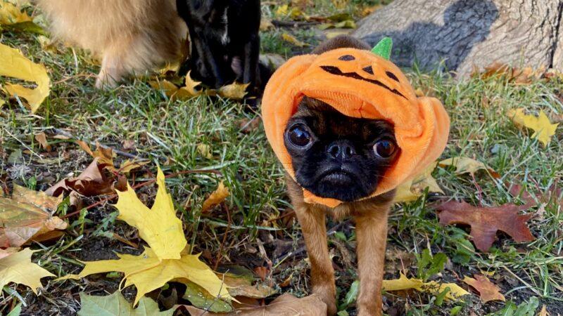 Petit Halloween